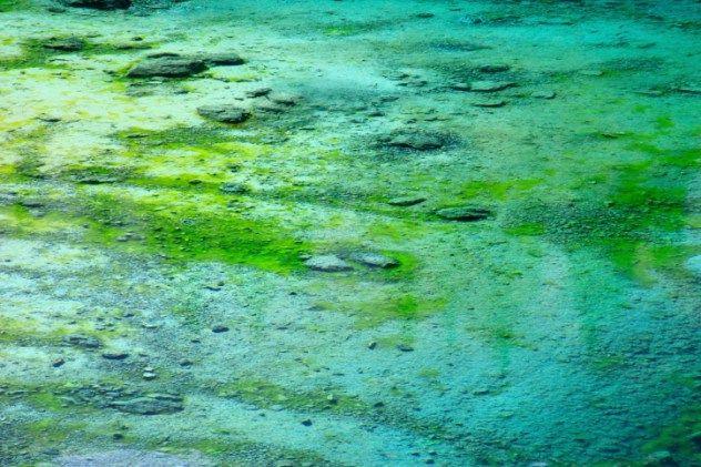 Сине-зелёные водоросли