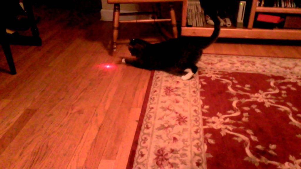Котенок играет с лазерной указкой