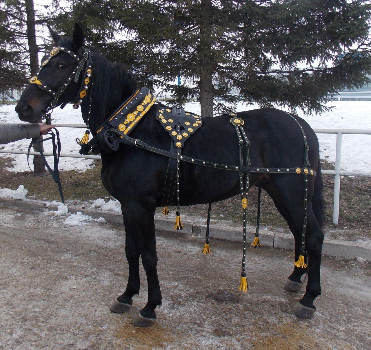 Лошадь в упряжи